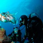 Dry suit diver – Курс дайвинга в сухом костюме
