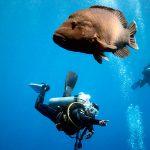 Open Water Diver ehk sukeldumise algkursus
